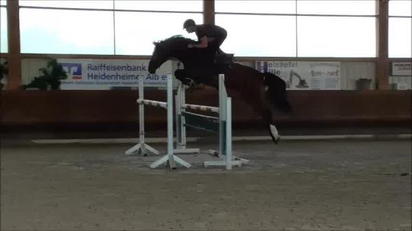Jumpers by Eldorado van de Zeshoek x Argentinus